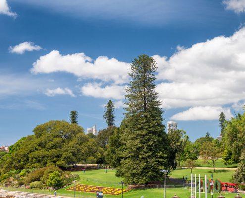 88282491 - royal botanic garden, sydney.
